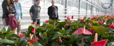 FlowerAcademy.NL