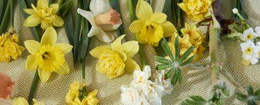 365 Dagen Bloemen